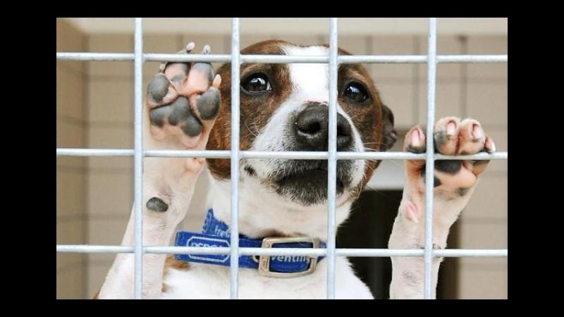 Rimini, vendita illegale 12 cuccioli di razza: denunciato negoziante