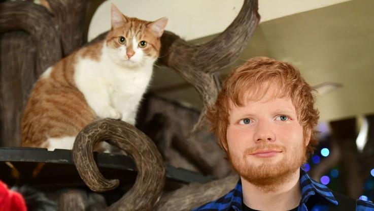 Ed Sheeran in incognito su Instagram: il cantante apre un nuovo account