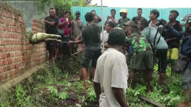 Indonesia, massacrano 292 coccodrilli per vendicare l'amico sbranato