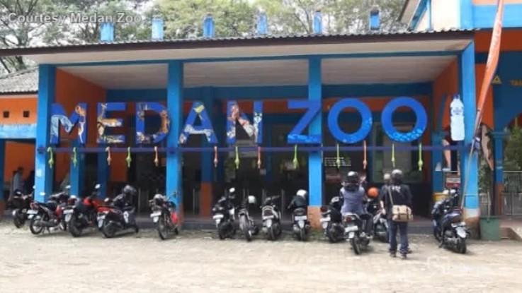 Indonesia, sono nati due cuccioli di tigre del Bengala nello zoo di Medan