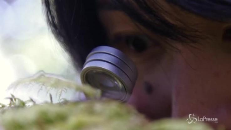 Giappone, tutti pazzi per il muschio selvatico