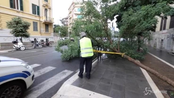 Maltempo a Roma, alberi caduti e strade allagate