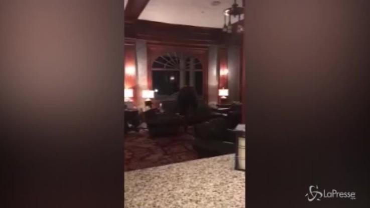 Ospite a sorpresa nell'hotel che ispirò 'Shining': l'orso bruno la fa da padrone