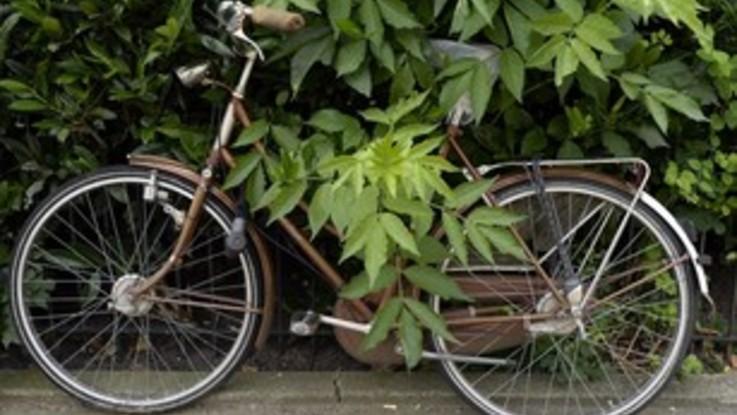 Olanda, treno travolge cargo bike: morti 4 bambini