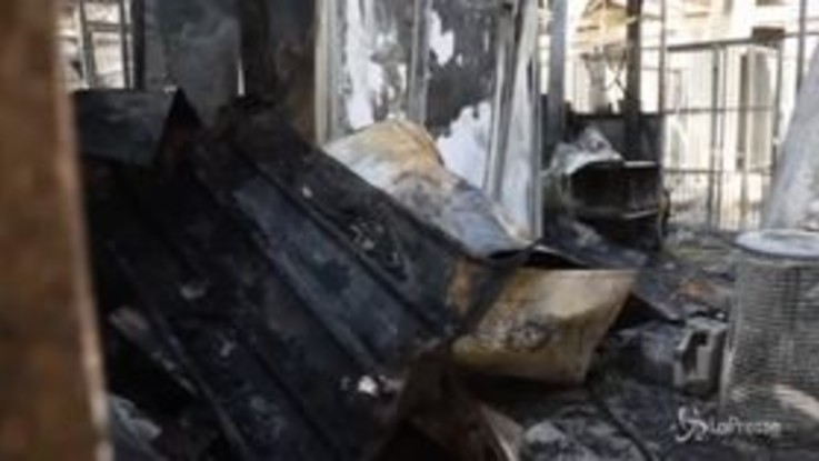 Milano, va a fuoco un gattile: morti 80 mici, in salvo i cani