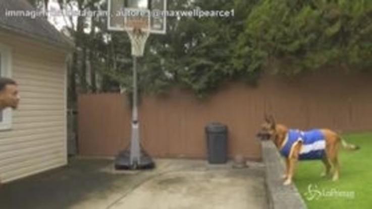 Il cane campione di basket: assist di muso e Alley-oop