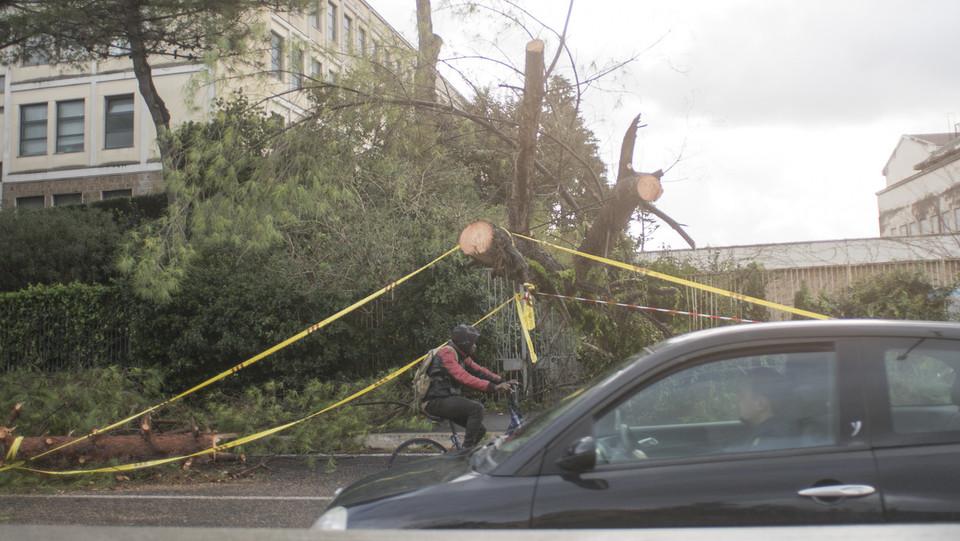 Maltempo, gli alberi caduti in via Tiburtina ©