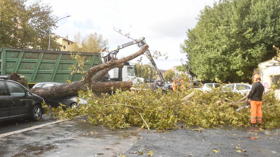 Maltempo, alberi caduti anche in via Fiorentini ©