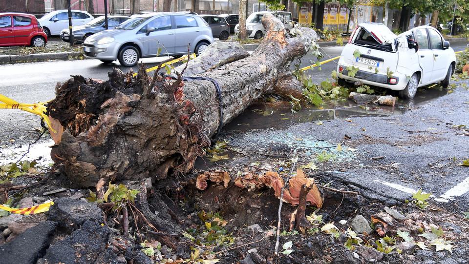 Maltempo, l'albero strappato con forza dal terreno in viale del Policlinico ©