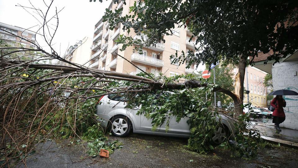 Maltempo, un albero caduto in viale della Moletta ©