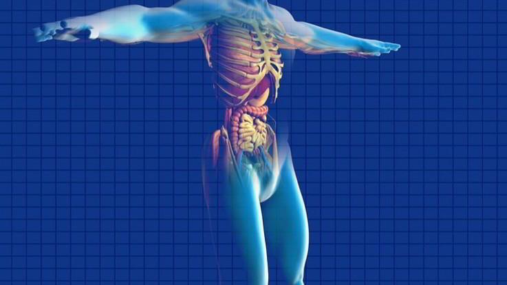 Un 'cecchino' contro il tumore al pancreas: nuovo studio con l'adroterapia