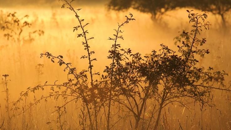 Nebbia al Nord, più sereno al Sud: il meteo del 14 e 15 novembre