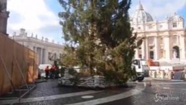 Roma dimentica Spelacchio: arrivato il grande albero di Natale di Piazza San Pietro