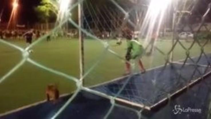 """In Brasile c'è un """"dogkeeper"""": il bassotto-portiere entra in campo e para un rigore"""