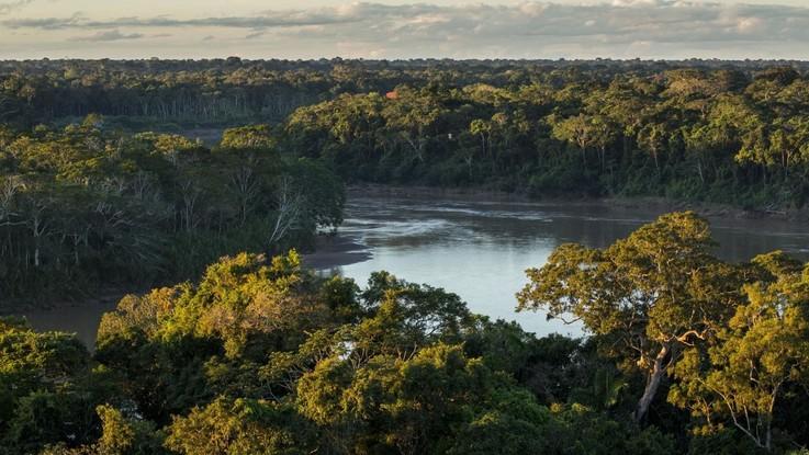 Emergenza deforestazione in Brasile: abbattuta un area grande come un milione di campi da calcio