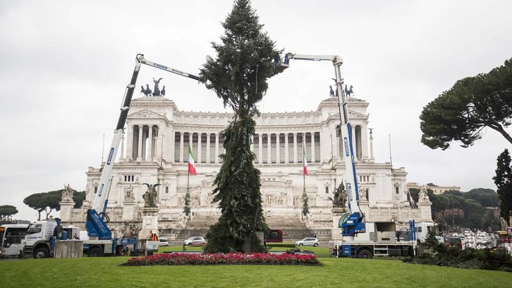 Roma, Spelacchio è in piazza Venezia: ora è maestro di resilienza