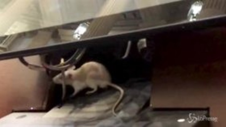 "Colombia, topi ""paracadutati"" nell'aula del Congresso: seduta sospesa"