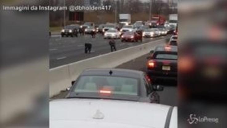 Un'auto perde banconote in autostrada: tra gli automobilisti scoppia il caos