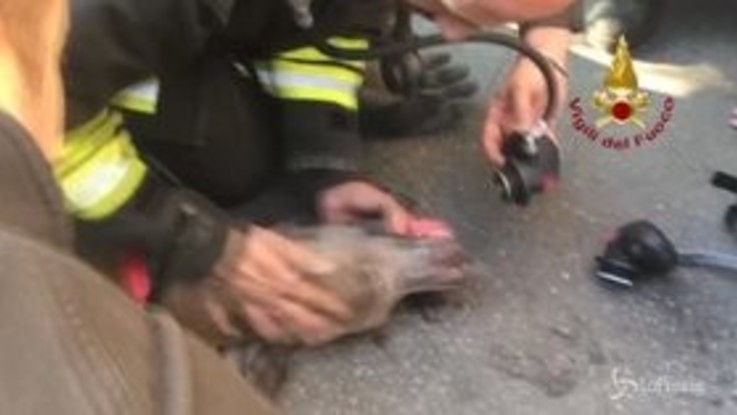 Incendio a Milano, vigili del fuoco salvano il cane intossicato dal fumo