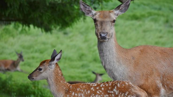 Bracconiere condannato a guardare 'Bambi' per un anno in carcere