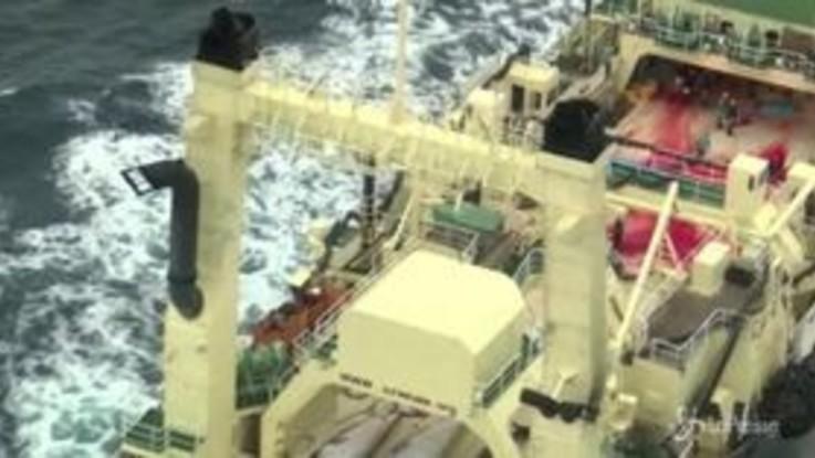 In Giappone riparte la caccia alle balene