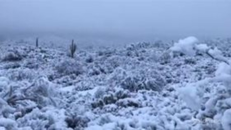 Neve in Arizona, i cactus imbiancati