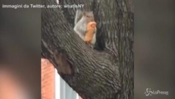 Pazzo per l'involtino primavera: lo scoiattolo che ama la cucina cinese