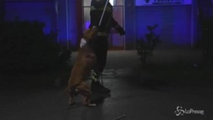 Milano, pitbull azzanna tre persone: l'animale catturato dai vigili del fuoco