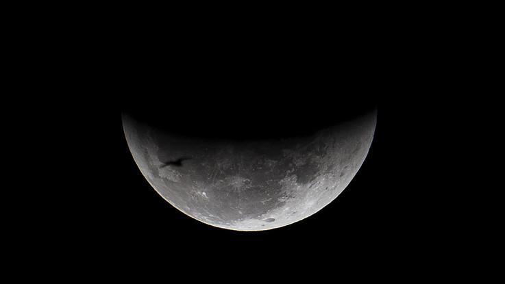 C'è vita sulla Luna: i cinesi fanno germogliare un seme di cotone