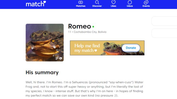 La rana Romeo non è più sola dopo 10 anni: con Giulietta scongiurerà l'estinzione