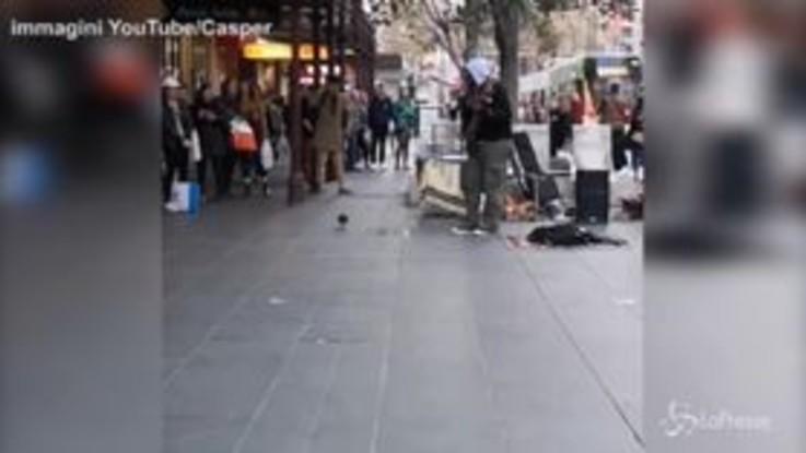 Il piccione balla con il musicista di strada e diventa una star