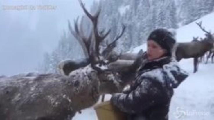 Neve a volontà e animali felici: sembra la Lapponia, invece è l'Austria