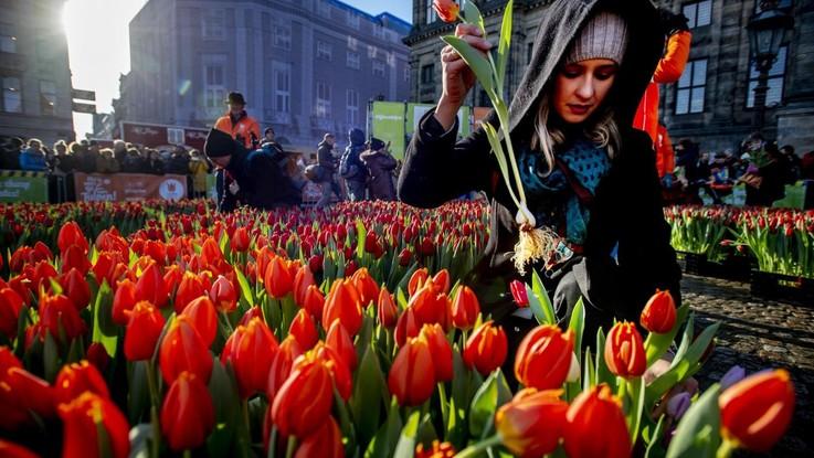 Piazza Dam ricoperta di 200mila tulipani: Amsterdam è un'esplosione di colori