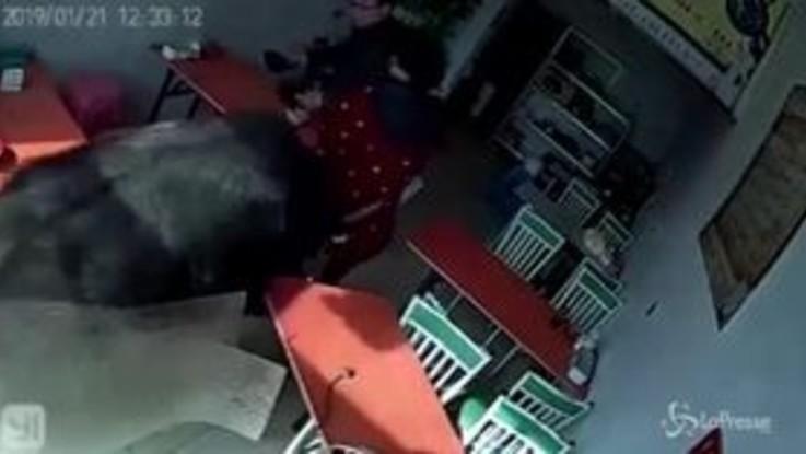 Bufalo infuriato insegue una donna in un ristorante e la incorna