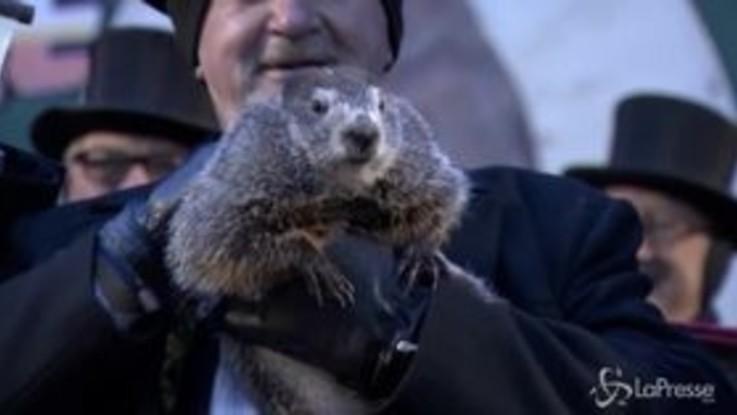 Sarà una bella primavera: lo prevede la marmotta Phil