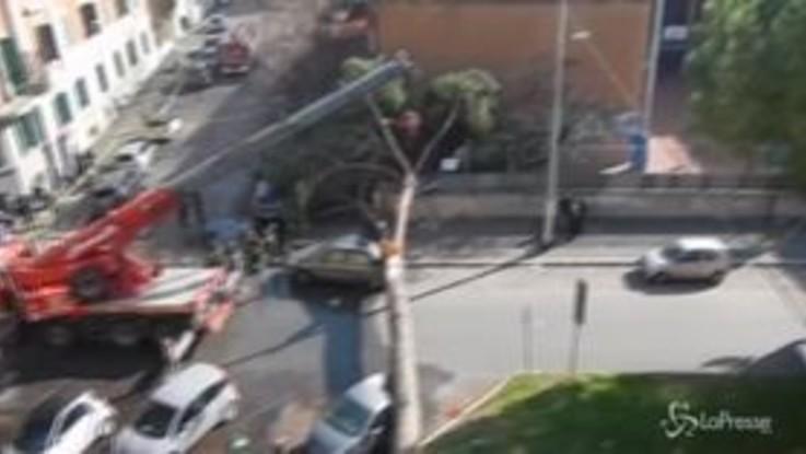 Roma, un pino cade sulle auto: paura davanti al liceo Giulio Cesare