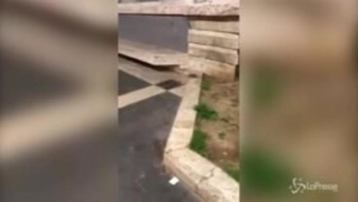Roma, i topi invadono le stazioni della metro
