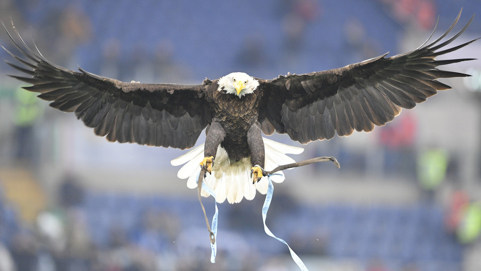 Vola Olimpia, l'aquila laziale ©