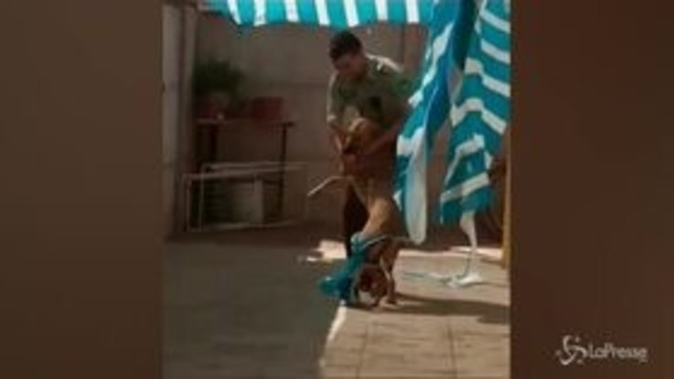 Poliziotto salva un cane intrappolato: l'abbraccio dell'animale è commovente