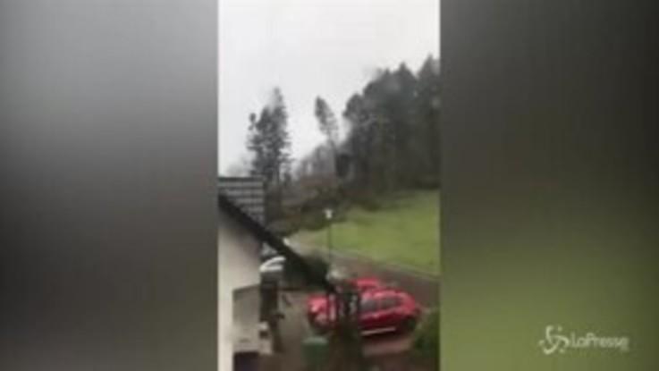 Germania, il vento è fortissimo: gli alberi cadono come birilli