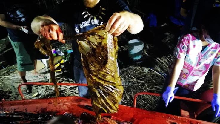 Balena morta con 40 chili di plastica nello stomaco