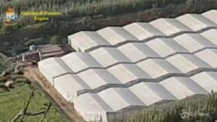 Gela, sequestrate 10mila piante di cannabis: un arresto