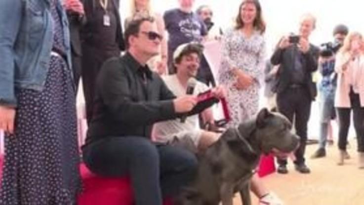 "Cannes, Tarantino ritira la ""Palm Dog Wamiz"": il premio al cane-star ""Brandy"""