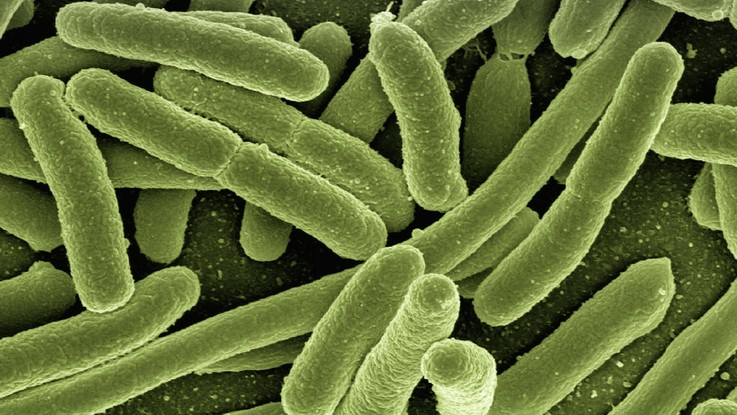 Batteri resistenti: 'souvenir' per quasi 500mila viaggiatori l'anno