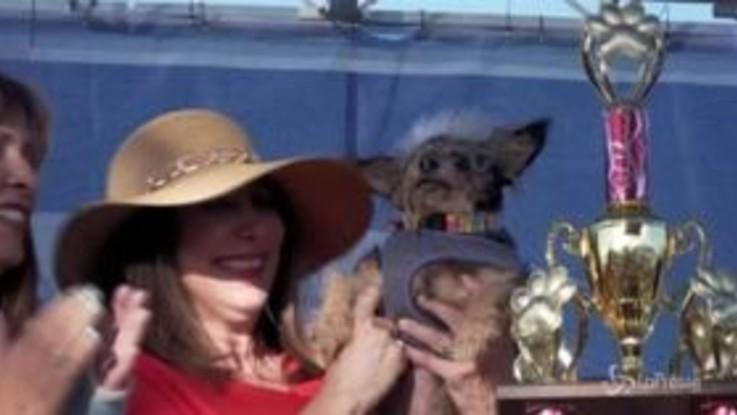 In California la mostra dei cani più brutti del mondo