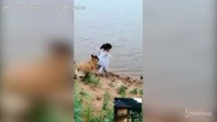 Pallone in acqua, il cane blocca la bimba e si getta al posto suo: il video commuove il web