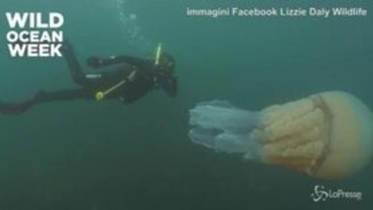 Medusa mostro: è grande quanto un uomo
