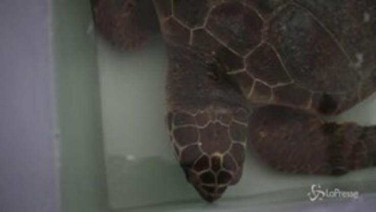 Viaggio nel Centro recupero animali marini di Montepaone, dove si salvano tartarughe e cetacei