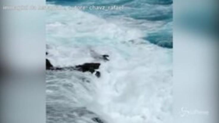 Hawaii, in posa per un selfie: un'onda risucchia le turiste in mare