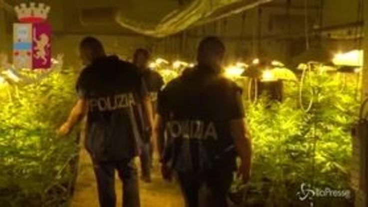Nuoro, nell'ovile 250 piante di marijuana: arrestato allevatore 60enne